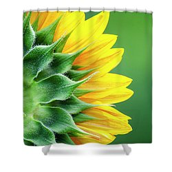 Yellow Sunflower Shower Curtain by Christina Rollo