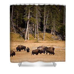 Yellowstone Bison Shower Curtain by Steve Gadomski