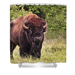 Young Buffalo Shower Curtain by Tamyra Ayles