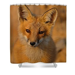 Young Fox Shower Curtain by William Jobes