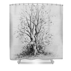 Young Tree Shower Curtain by Rachel Christine Nowicki