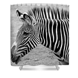 Zebra - Here It Is In Black And White Shower Curtain by Gordon Dean II