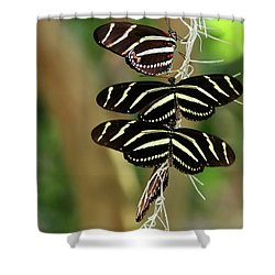 Zebra Butterflies Hanging On Shower Curtain by Sabrina L Ryan