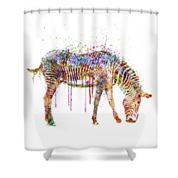 Zebra Watercolor Painting Shower Curtain by Marian Voicu
