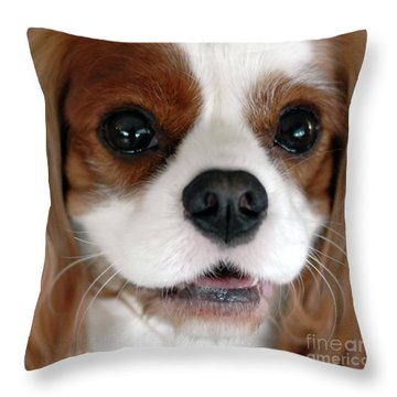 Kc-2 Throw Pillow by Kathleen Struckle