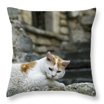 080720p005 Throw Pillow by Arterra Picture Library