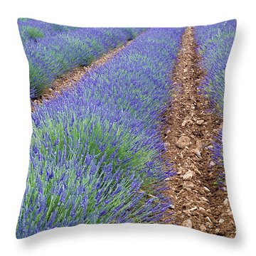 080720p071 Throw Pillow by Arterra Picture Library