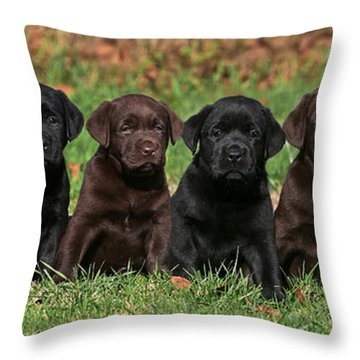 8 Labrador Retriever Puppies Brown And Black Side By Side Throw Pillow by Dog Photos