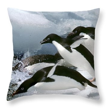 Adelie Penguins Throw Pillow by Art Wolfe