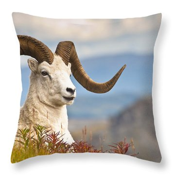 Adult Dall Sheep Ram Resting Throw Pillow by Michael Jones