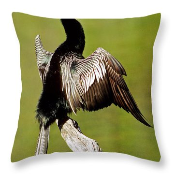 Anhinga Anhinga Anhinga Drying Plumage Throw Pillow by Millard H. Sharp