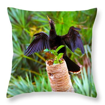 Anhinga Anhinga Anhinga On A Tree Throw Pillow by Panoramic Images