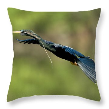 Anhinga Throw Pillow by Anthony Mercieca