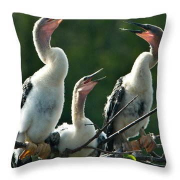 Anhinga Chicks Throw Pillow by Mark Newman