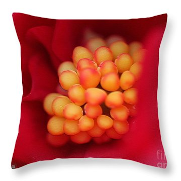 Begonia Named Nonstop Mocca Scarlet Throw Pillow by J McCombie