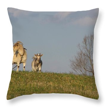 Caprine Hill Throw Pillow by Matt Taylor