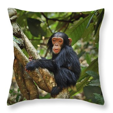 Chimpanzee Baby On Liana Gombe Stream Throw Pillow by Thomas Marent