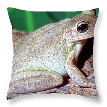 Cuban Tree Frog Osteopilus Throw Pillow by Millard H. Sharp