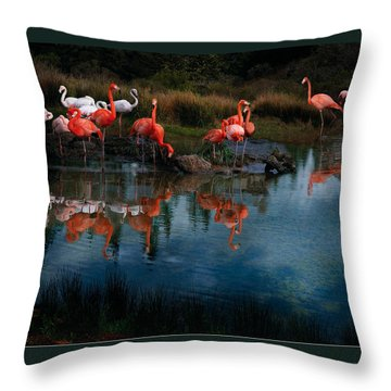 Flamingo Convention Throw Pillow by Melinda Hughes-Berland