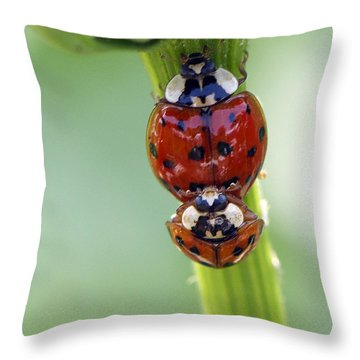 It Takes Two Throw Pillow by Sharon Talson