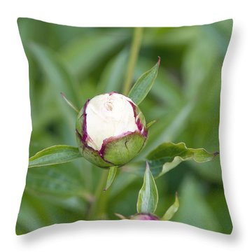 Paeonia Lactiflora Shirley Temple Throw Pillow by Jon Stokes