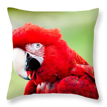 Parrot Throw Pillow by Sebastian Musial