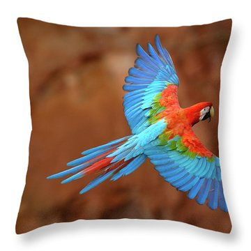 Red And Green Macaw Flying Throw Pillow by Pete Oxford