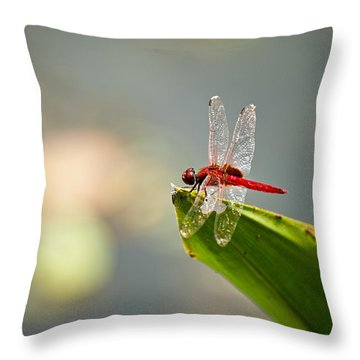 Red Dragonfly Throw Pillow by Ulrich Schade