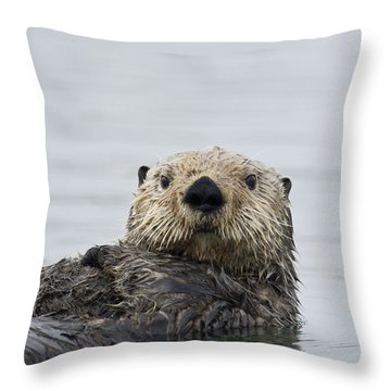 Sea Otter Alaska Throw Pillow by Michael Quinton