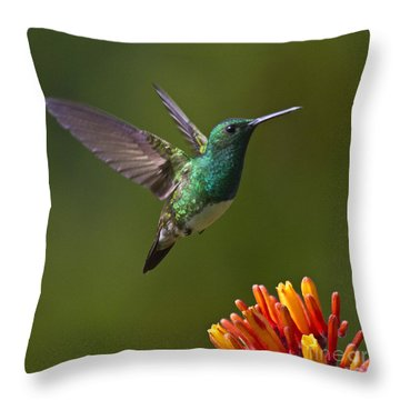 Snowy-bellied Hummingbird Throw Pillow by Heiko Koehrer-Wagner