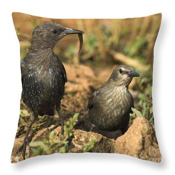 Starling Estornino Throw Pillow by Guido Montanes Castillo