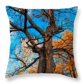 Texture Of The Bark. Old Oak Tree Throw Pillow by Jenny Rainbow