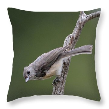 Tufted Titmouse Throw Pillow by Todd Hostetter