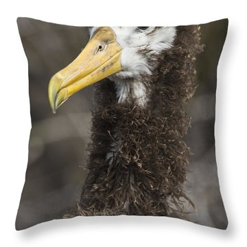 Waved Albatross Molting Juvenile Throw Pillow by Pete Oxford