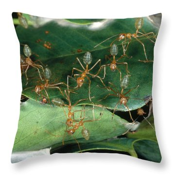 Weaver Ants Throw Pillow by Gregory G. Dimijian, M.D.