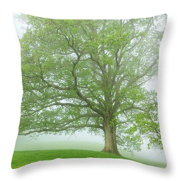 White Oak Tree In Fog Throw Pillow by Thomas R Fletcher