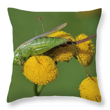 110221p245 Throw Pillow by Arterra Picture Library