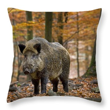 121213p283 Throw Pillow by Arterra Picture Library