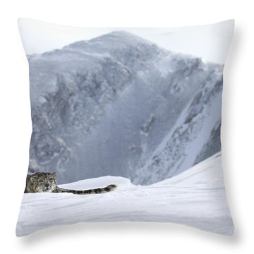Absolute Solitude Throw Pillow by Wildlife Fine Art