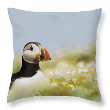 Atlantic Puffin In Breeding Plumage Throw Pillow by Sebastian Kennerknecht