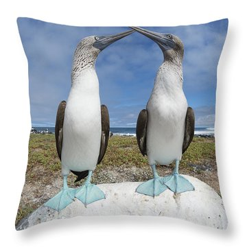 Blue-footed Booby Pair Courting Throw Pillow by Tui De Roy