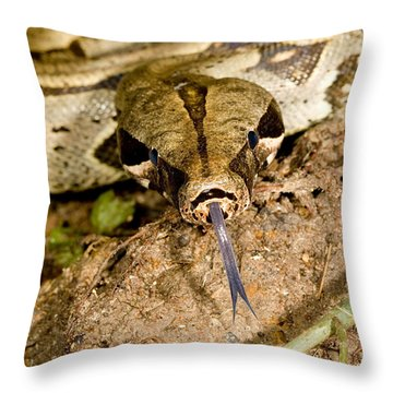 Boa Constrictor Throw Pillow by Gregory G. Dimijian, M.D.