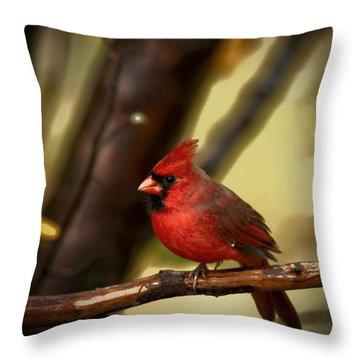 Cardinal Pose Throw Pillow by Karol Livote