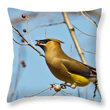 Cedar Waxwing With Berry Throw Pillow by Robert Frederick