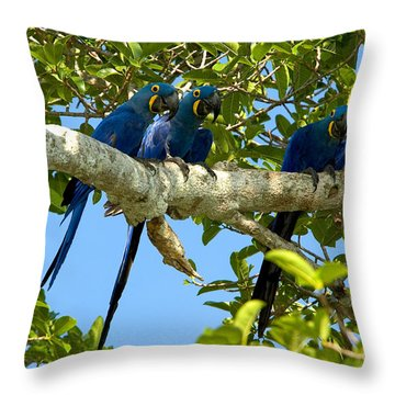 Hyacinth Macaws, Brazil Throw Pillow by Gregory G. Dimijian, M.D.