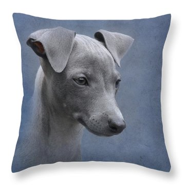 Italian Greyhound Puppy Throw Pillow by Angie Vogel