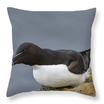 Razorbill Throw Pillow by John Shaw