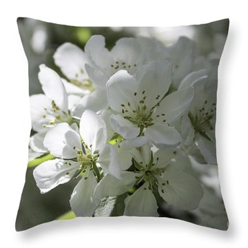 Tea Crabapple Throw Pillow by Arlene Carmel