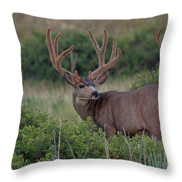 Two In The Bush Throw Pillow by Jim Garrison