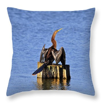 Wet Wings Throw Pillow by Al Powell Photography USA